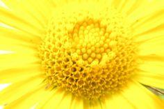 Flowers From my Garden #15