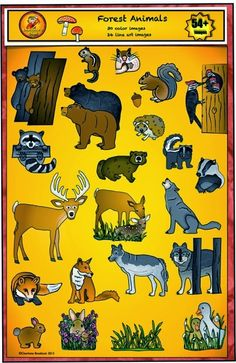 Animals - Forest and Woodland clip art set from Charlotte's Clips.  54 piece set includes color and line art for bears, chipmunk, deer, wolves, foxes, ducks, rabbits, groundhog, squirrels, hedgehog, badger, raccoon, woodpeckers, skunk, grass, mushrooms, acorn.  Great for fall themes such as animals preparing for winter, hibernation, habitats, biomes, food chain and much more...high quality and low price makes this a great set for autumn.