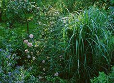 www.rustica.fr - DOSSIER : Réussir un jardin à l'ombre