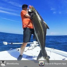 @brettbarley landed a big ass Cobia......you know that monster had to give a good fight! #cobia #cobiafishing #fish #fishing #fishinglife #fishingtrip #angler #amazing #awesome #anglerapproved #inshore #instalike #instadaily #instafollow #inshorefishing #offshore #offshorelife #offshorefishing #killedit #picoftheday #monster #monsterfish #bigfish #biggame #bigcobia #bigassfish #saltlife #catchingfish #catchoftheday by monsterfishingpics