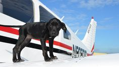 Pilots N Paws has transported thousands of rescue animals, often flying them hundreds of miles from where they were found so they can find forever homes.