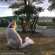 Enjoying the sunset in our green and beautiful country 🇸🇪 + + + = Denmark, Sweden, Vikings, Netherlands, Travelling, Corgi, Gold Box, Sunset, Country