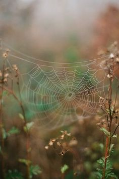 swansong-willows: Spider web by Flashbaxxx on Flickr (via Pinterest: Discover and save creative ideas)