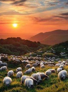 New Zealand landscape (flora and fauna) McElhinney McElhinney Alvarado - Where sheep outnumber us seven to one! Amazing Photography, Landscape Photography, Nature Photography, Beautiful World, Beautiful Places, Beautiful Sunset, New Zealand Landscape, Belle Photo, Beautiful Landscapes