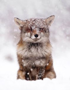 cozy wintertime.