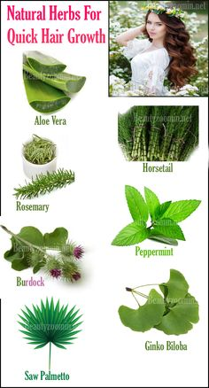 Skin Care Tips For Beautiful Skin Natural Herbs For Quick Hair Growth The hair is a symbol of beauty, status, and health. It is essential for you to take proper care of your health in order to stop early hair loss. Hair loss is a common concern these days Herbs For Hair Growth, Quick Hair Growth, Hair Growth Oil, Natural Hair Growth, Oil For Hair Loss, Stop Hair Loss, Belleza Diy, Natural Hair Loss Treatment, Natural Hair Care