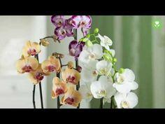 Orchideen badezimmer ~ Die besten orchideen im glas ideen auf topf