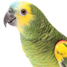 From diet and medical concerns to cataracts in birds, find out everything you need to know about your senior parrot.