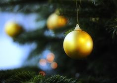 1000+ images about REAL Christmas Trees - the aroma makes all the ...