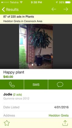 Gumtree plant for inside