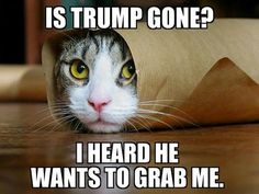 Is Trump gone? I hear he wants to grab me. Kittens and cats of the world, unite.