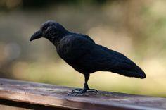 https://www.etsy.com/nl/listing/224074972/crow-needle-felted-handmade-wool-bird