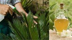 Orange Oil Insecticide Recipe - all natural using orange oil, compost tea, and molasses