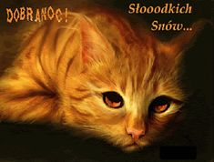 Wierszyki i gify na dobranoc: Gify na dobranoc kotki Pulpit, Cats, Animals, Dog Love, Animais, Gatos, Animales, Kitty Cats, Animaux