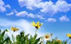 Spring Desktop Backgrounds Free - Wallpaper HD Wide