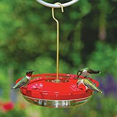 Looking to make your own hummingbird food? Then this hummingbird nectar recipe will help you do just that! Save money and keep your hummingbirds coming back again and again. Hummingbird Nectar, Glass Hummingbird Feeders, Hummingbird Food, Hummingbird Garden, Sugar Water For Hummingbirds, How To Attract Hummingbirds, Attracting Hummingbirds, Wild Bird Feeders, Humming Bird Feeders