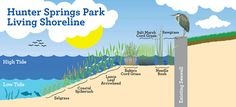 Hunter Springs Park Living Shoreline Project. This project will restore shoreline habitat and improve water quality in Kings Bay.