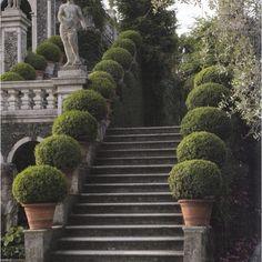stairway of boxwood topiaries in terracotta planters