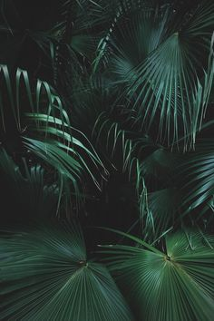 Image uploaded by dαydreαming. Find images and videos about nature, green and tropical on We Heart It - the app to get lost in what you love. Plant Wallpaper, Green Wallpaper, Trendy Wallpaper, Dark Green Aesthetic, Plant Aesthetic, Slytherin Aesthetic, Green Life, Tropical Plants, Tropical Leaves