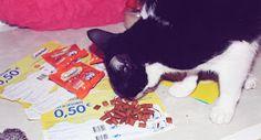 Na semana passada recebi cá em casa uma caixinha repleta de biscoitinhos para os gatinhos. Mais uma vez , em parceria com a Youzz, ...