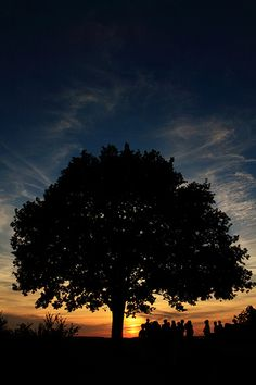 Sunset Tree Travel Guide, Travel Destinations, Fan, Facebook, Sunset, Outdoor, Places, Stuttgart, Nature