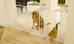 Groupon - Maxi Walk-Thru Pet Gate  in [missing {{location}} value]. Groupon deal price: $39.99