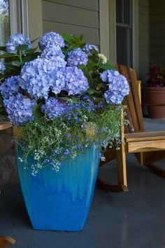 A pretty planter of Lobelia, Alysseum, and Hydrangea