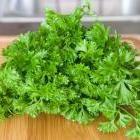 How to Freeze Herbs: Organic Gardening
