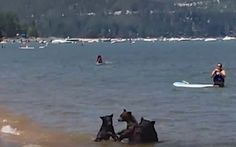 Bear family ignores crowd, enjoys refreshing dip in Lake Tahoe Read more at http://www.grindtv.com/wildlife/adorable-bear-family-ignores-crowd-enjoys-refreshing-dip-in-lake-tahoe/#RdQ6QQA2dGCt6o4R.99