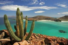 Balandra Beach - One of the most incredible beaches in La Paz, Mexico, famous for its white sand beach with a pure turquoise water, similar of what you can find in the Caribbean. It's a perfect beach for relaxation or for enjoying any water activity like kayak, SUP or snorkeling