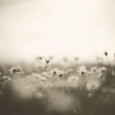 Dreaming of a field of daisies...lazy hazy days of summer