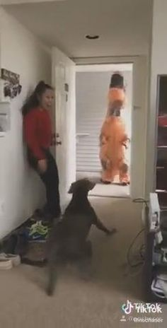 Funny Animal Jokes, Funny Dog Memes, Funny Cats And Dogs, Funny Video Memes, Really Funny Memes, Cute Funny Animals, Funny Videos For Kids, Super Funny Videos, Funny Animal Videos