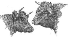 Homestead Cows For Sale, Milking Cows For Sale, Miniature Cows For Sale and Mini Cows For Sale from Dexter Cattle. Miniature Cows For Sale, Miniature Cattle, Types Of Cows, Dexter Cattle, Cow Cookies, Raising Cattle, Mini Cows, Holstein Cows, Paintings