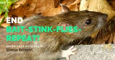 Killing Rats Is Never The Goal - Exclusion is The Goal! Simon Berenyi Exclusion is always the primary end goal of rat control because exclusion avoids the destructive, wasteful and inhumane system of BAIT-STINK-FLIES-REPEAT. Joining The Pest.