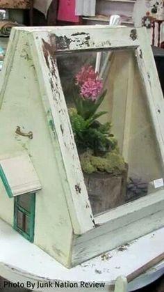 Windows made into terrarium