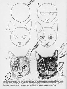 How to draw a cat:  Draw a circle.  Put in a cross for the placement of the eyes.  Get a professional artist to fill in all the hard bits.