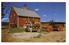 new age barns | Playle's: Team of Oxen Outside Barn, New Ross, Nova Scotia, Book Room ...