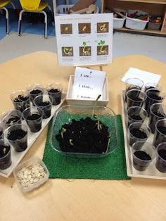 planting pumpkin seeds, life cycle of a pumpkin, and recording sheets