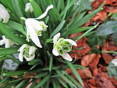 Moments, frozen in time ♡: Owl and Snowdrops in Garden