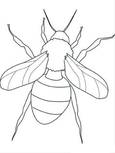 Insect Coloring Pages Birds And Insects Coloring Pages. Insect Coloring Pages Animal Coloring Pages. Fly Coloring Pages Insect Coloring Pages Insect Coloring Pages, Butterfly Coloring Page, Coloring Pages To Print, Animal Coloring Pages, Coloring Book Pages, Printable Coloring Pages, Coloring Pages For Grown Ups, Free Adult Coloring Pages, Free Coloring