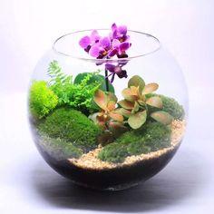 флорариум с орхидеями: 13 тыс изображений найдено в Яндекс.Картинках