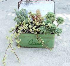 succulents. by freida