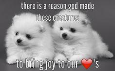 Joy Is What We Need