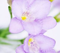 #Flowers #violet #tenderness ...PUSH and choose ...Image 1 of 6