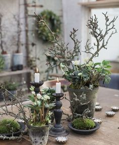 Winter plants and decoration - Winter & Christmas Trents Natural Christmas, Christmas Flowers, Winter Christmas, Christmas Decorations, Holiday Decor, Christmas Candles, Simple Christmas, Christmas Thoughts, Country Christmas