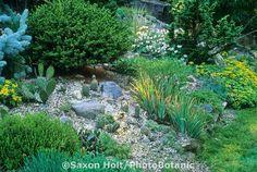 Hardy cactus collection in Connecticut rock garden.Copyright.  Saxon Holt/PhotoBotanic. 415-898-8880