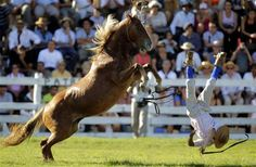 A gaucho is thrown off an untamed horse during the Patria Gaucha Festival in Tacuarembo, 400 km (249 miles) north of Montevideo, Uruguay, March 8, 2012. The festival celebrates the preservation of the country's rural traditions and country life.  REUTERS/Andres Stapff