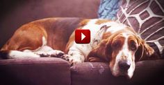 Humans Are a Dog's Best Friend. And I Totally Want to 'Borrow' This Smart Dog. LOL - Funny Video