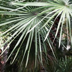 Passion for palm trees II - Rentome Palm Trees, Plant Leaves, Passion, Posters, Plants, Palm Plants, Poster, Plant, Billboard