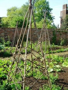 Twig Garden Trellis